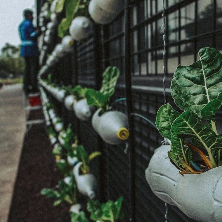 Tips for Frugal Living_vertical gardening