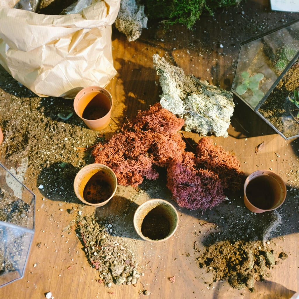 How to Start a Herb Garden in Pots