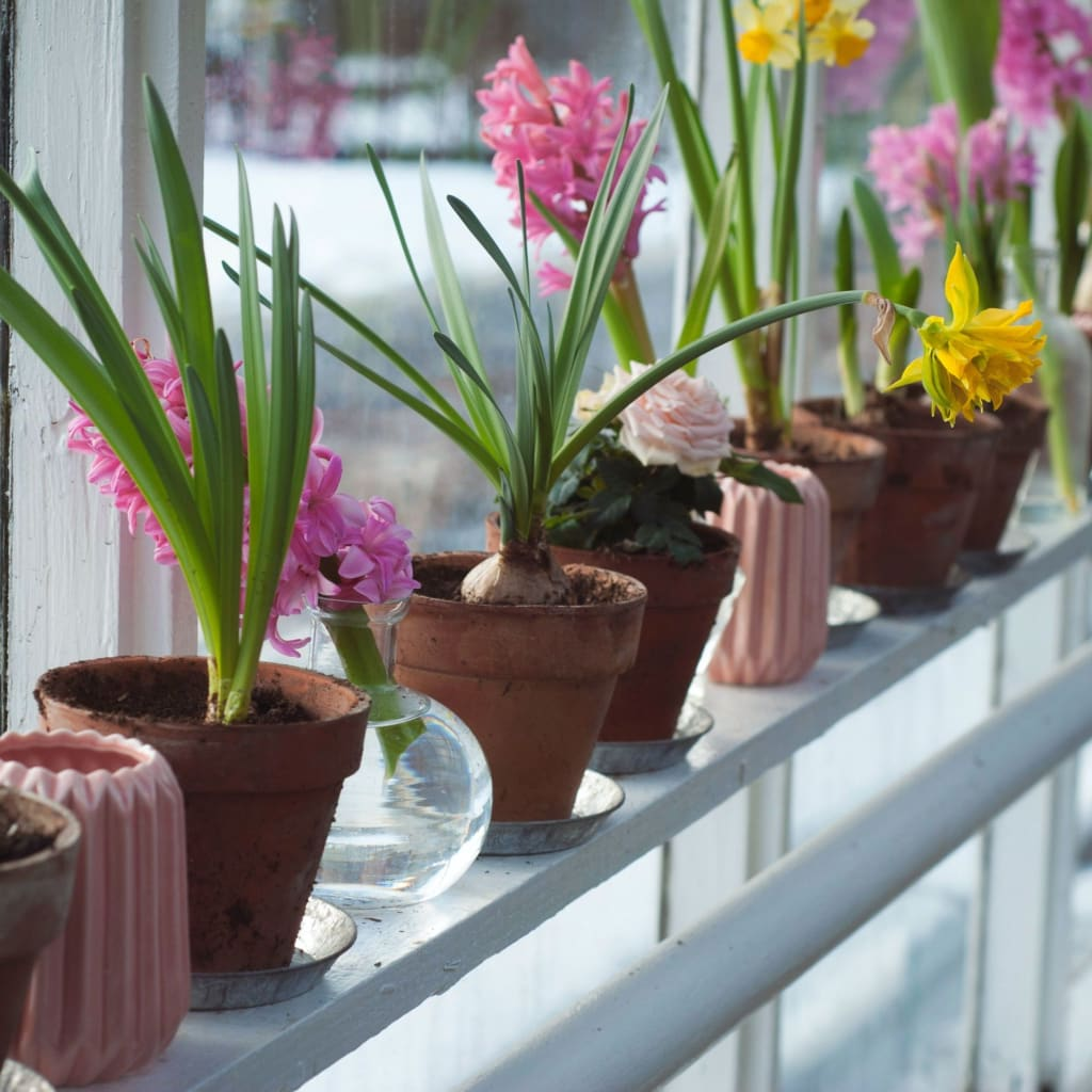 Benefits of container gardening no garden